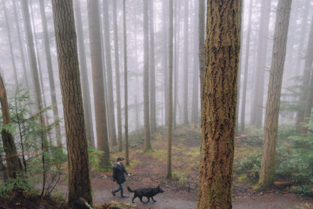Dog Walking in the Cascade Mountains