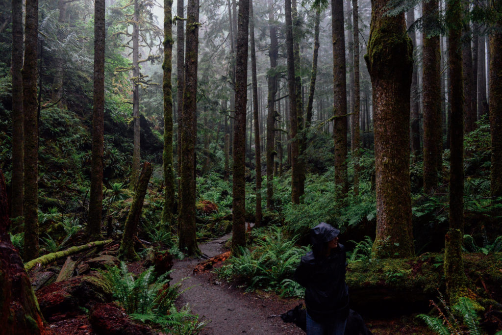 Rain Hike in the wilderness