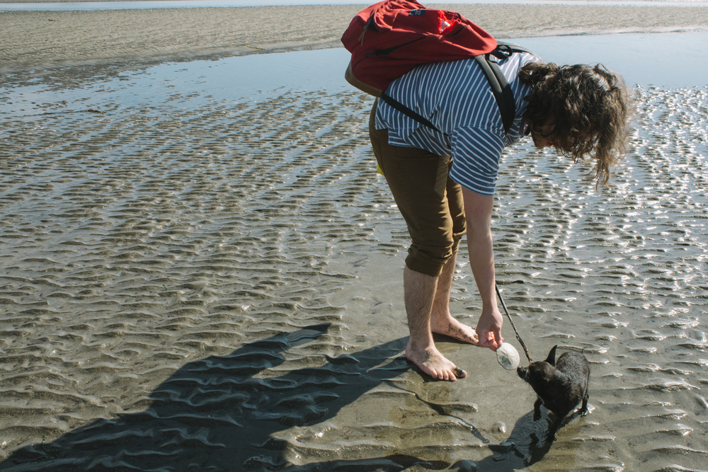 Dog meets Sand Dollar Beach waters of Neah Bay